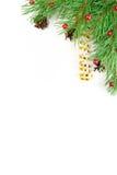 Ramificación de la Navidad Fotos de archivo
