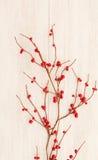 Ramificación de la Navidad con las bayas rojas Imágenes de archivo libres de regalías