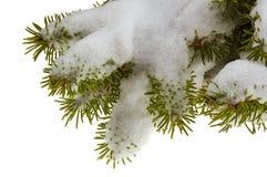 Ramificación de la nieve Fotos de archivo libres de regalías