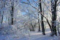 Ramificación de la nieve Imagen de archivo libre de regalías