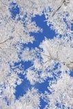 Ramificación de la nieve Imágenes de archivo libres de regalías