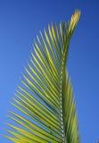 Ramificación de la palma Imagenes de archivo
