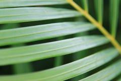 Ramificación de la palma Fotos de archivo