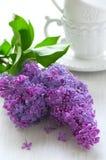 Ramificación de lilas Foto de archivo libre de regalías