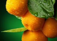 Ramificación de los mandarines Foto de archivo libre de regalías