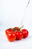 Ramificación de los tomates Imagenes de archivo