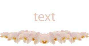 Ramificación de orquídeas Fotos de archivo