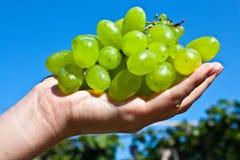 Ramificación de uvas verdes en una palma de la muchacha Imagen de archivo libre de regalías