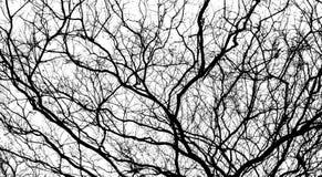 Ramificación del árbol Foto de archivo
