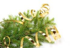 Ramificación del árbol de navidad y cinta de oro Imágenes de archivo libres de regalías