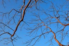Ramificación del árbol y del cielo azul Imagenes de archivo