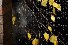 Ramificación del abedul bajo gotas de lluvia en otoño Foto de archivo libre de regalías