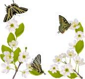 Ramificación del cerezo con las mariposas amarillas Imagenes de archivo