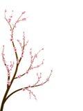 Ramificación del flor de cereza ilustración del vector