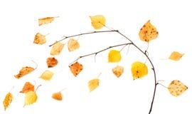 Ramificación del otoño Foto de archivo libre de regalías