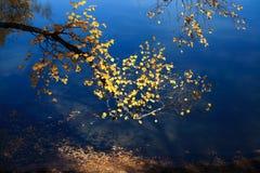 Ramificación del otoño Imagen de archivo