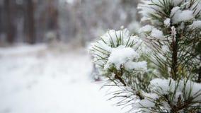 ramificación del pino en nieve Nevadas en el Forest Park Paisaje del invierno en parque borroso nevado Vídeo de Hd almacen de video