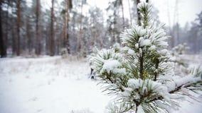 ramificación del pino en nieve Nevadas en el Forest Park Paisaje del invierno en parque borroso nevado Vídeo de Hd almacen de metraje de vídeo