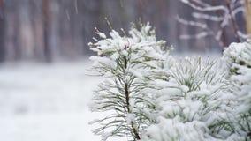 ramificación del pino en nieve Nevadas en el Forest Park Paisaje del invierno en parque borroso nevado Vídeo de Hd metrajes