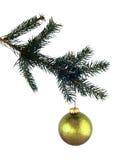 Ramificación del pino y vidrio aislados del oro Imagen de archivo libre de regalías