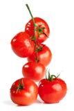 Ramificación del tomate fotografía de archivo