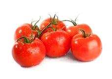 Ramificación del tomate aislada sobre un fondo blanco fotografía de archivo