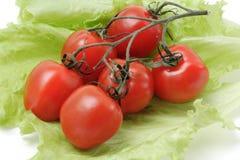 Ramificación del tomate de cereza Fotografía de archivo libre de regalías
