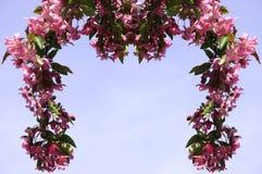 Ramificación floreciente Imagenes de archivo