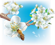 Ramificación floreciente y una abeja Foto de archivo