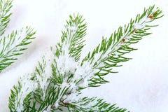 Ramificación nevada del pino Fotografía de archivo
