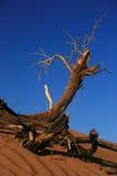 Ramificación seca en desierto Imágenes de archivo libres de regalías