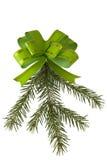 Ramificación verde del arqueamiento y del piel-árbol Imágenes de archivo libres de regalías