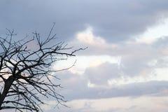 Ramificación y cielo Imágenes de archivo libres de regalías