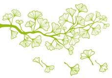 Ramificación con las hojas, vector del Ginkgo Foto de archivo libre de regalías