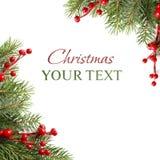 Ramificación de árbol verde de la Navidad en blanco Imágenes de archivo libres de regalías