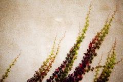 Ramificaciones abstractas foto de archivo libre de regalías