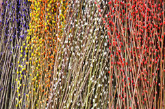 Ramificaciones coloridas del árbol de melocotón Fotos de archivo libres de regalías
