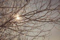 Ramificaciones contra el cielo Fotos de archivo