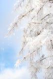 Ramificaciones cubiertas con nieve foto de archivo