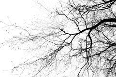 Ramificaciones de árbol fotos de archivo