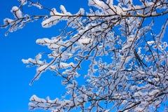 Ramificaciones de árbol Foto de archivo