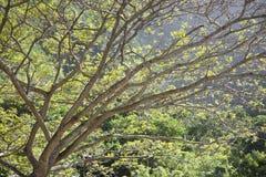 Ramificaciones de árbol. Imágenes de archivo libres de regalías