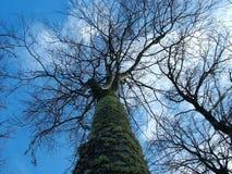 Ramificaciones de árbol Fotos de archivo libres de regalías