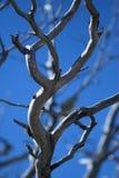 Ramificaciones de árbol Foto de archivo libre de regalías