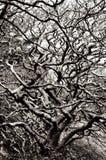 Ramificaciones de árbol abstractas Fotografía de archivo libre de regalías