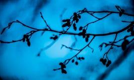 Ramificaciones de árbol con las hojas con nublado Imagen de archivo libre de regalías