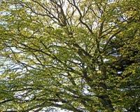 Ramificaciones de árbol con las hojas con nublado Imagenes de archivo