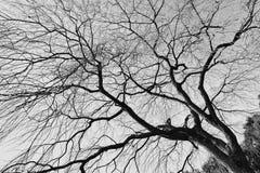 Ramificaciones de árbol con las hojas con nublado fotografía de archivo