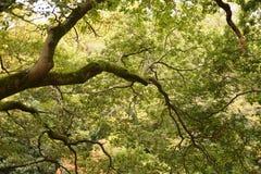 Ramificaciones de árbol con las hojas con nublado Fotos de archivo libres de regalías