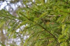 Ramificaciones de árbol con las hojas con nublado Fotos de archivo